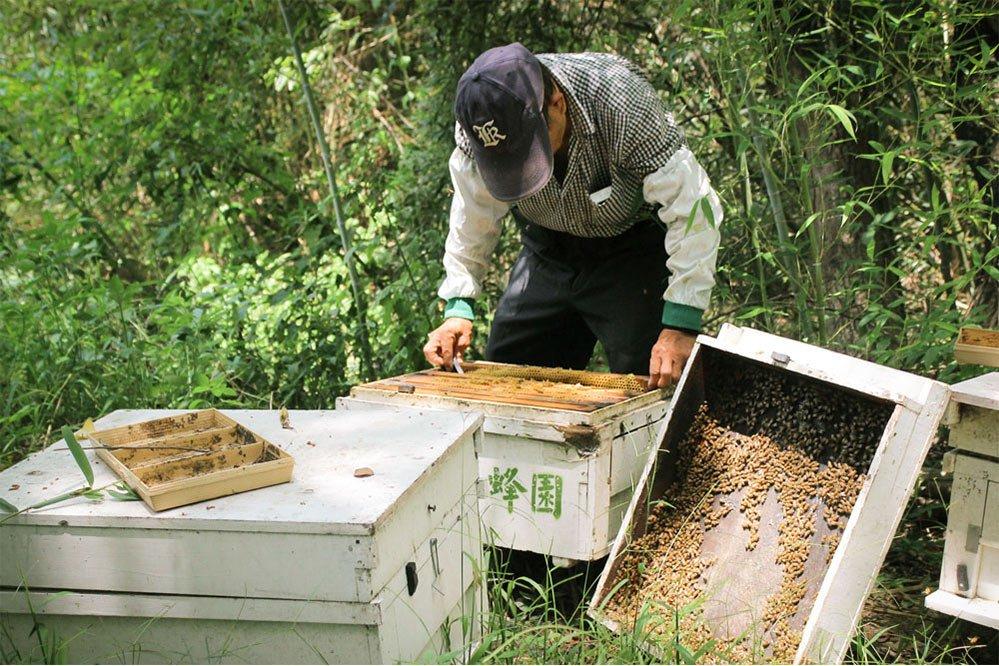 苗栗養蜂人家